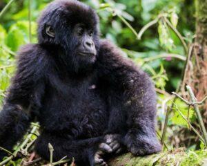 -Virunga_Safari119 (2)