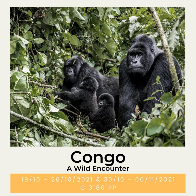 Congo A Wild Encounter The Wildlinger
