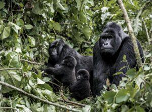 Virunga National Park The Wildlinger A Wild Encounter Congo